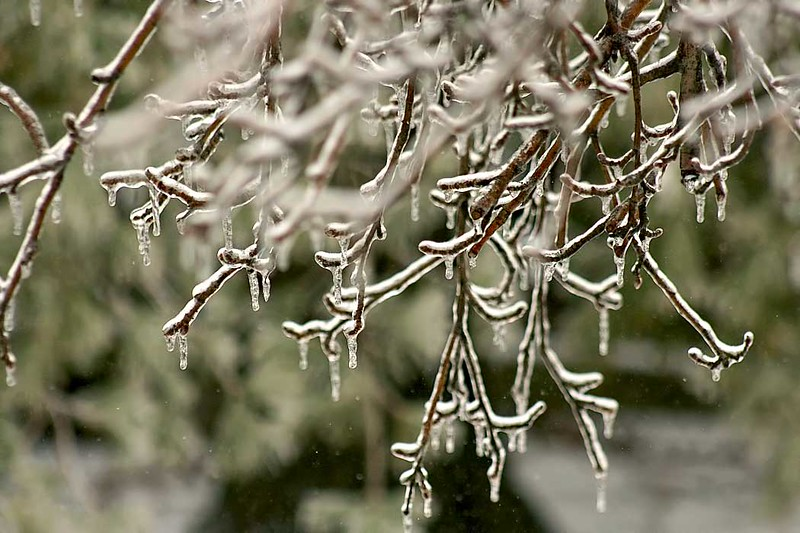 Naked trees are coated with ice after a winter ice storm in Wilmington, Illinois