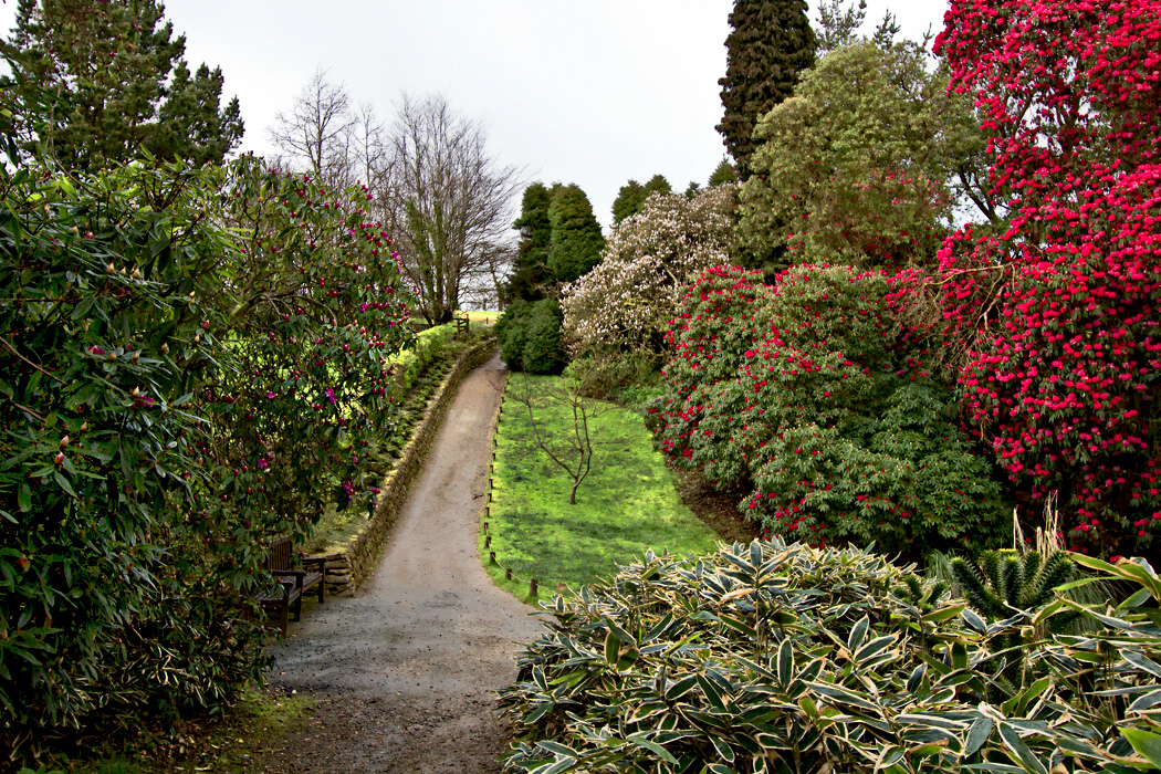 Bushes bursting with spring blooms at The Lost Gardens of Heligan in Cornwall, England