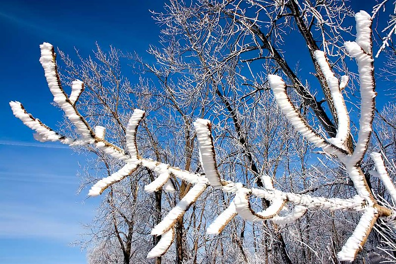 Brilliant blue sky provides gorgeous backdrop for frost-coated trees in Wilmington, Illinois