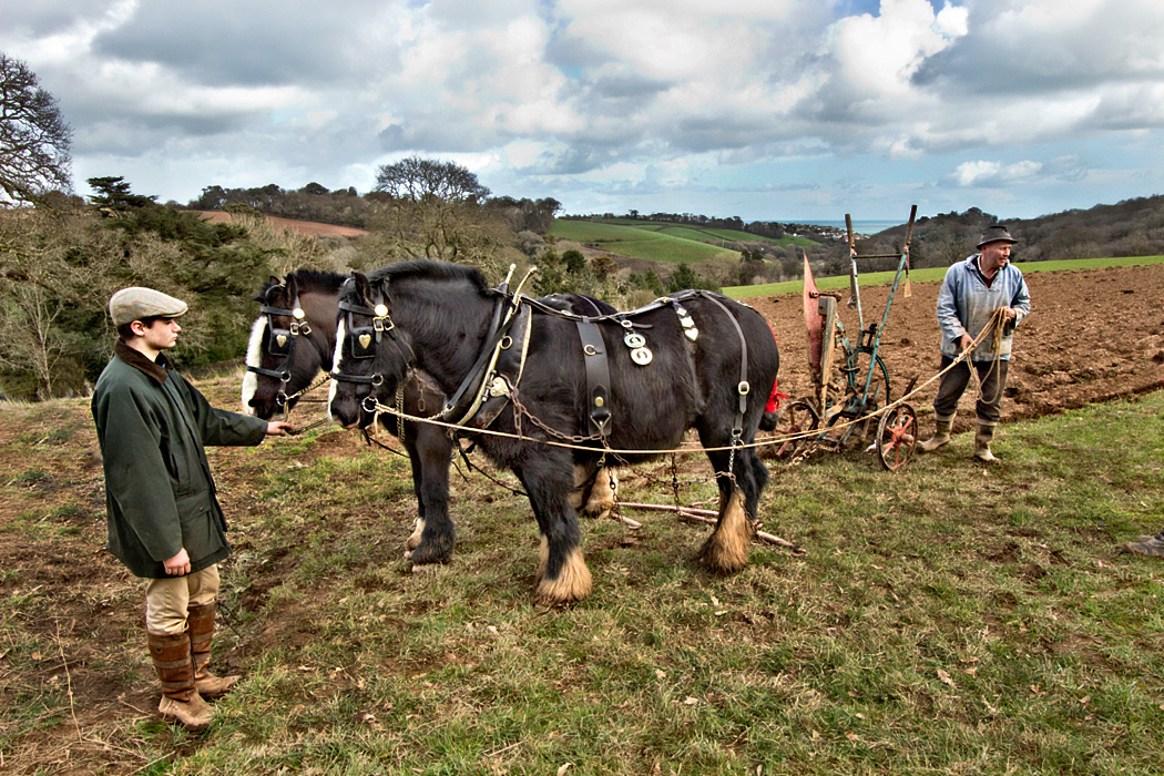 Horses plow fields in traditional manner at Lost Gardens of Heligan in Cornwall, England