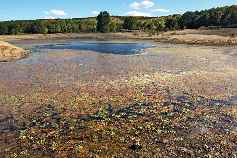 Rainbow algae blooms in a lake near the town of Yasna Polyana, Bulgaria