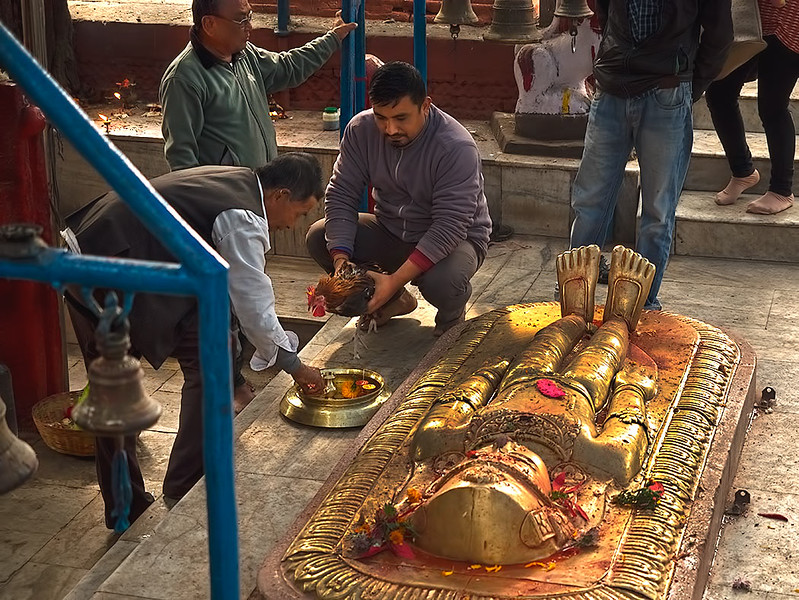 Sacrificing a chicken at the Pachali Bhairab Temple on the Bagmati River in Kathmandu, Nepal