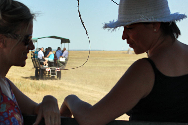 Riding in a traditional wagon through the great pustza grasslands at Mata Stud Farm, Hortobagy National Park, Hungary